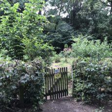 Ein Garten für Alle – Es geht wieder los!